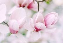 flower / by JagooDica BoobiCa
