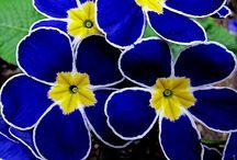 FLOWERS (MOSTLY) / by Deb Van Wyck