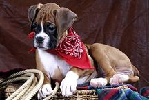 Boxers, In Memory Of Our Precious Rocky / by Janis Sweat