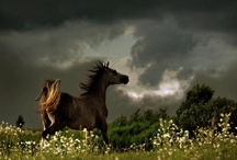 Horses / by Wind 2 Flowerz