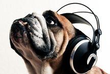 Music: E Tv / by ERICKA R.