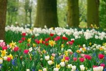 Garden Love / by Tammy Strobel