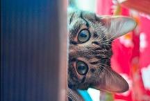 Gatos  / http://melidixit.blogspot.com/ / by Conqui I.