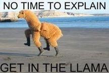 Llamas are hilarious / Why is that Llamas are so funny?  When all else fails in your Social Media Canpaign- post Llama Memes!  #llamaattitude #llamameme #Llamahumour #funnyanimal / by Weddingfavours.ca