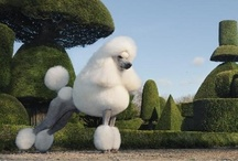 Fuzzy Poodles / Cute Fuzzy Poodles - See Mojo (my red toy poodle) & home organizing tips at http://www.alejandra.tv  / by Alejandra Costello | Home Organizing Tips