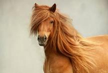 Beautiful Horses / by Karen Bedson/Westerberg