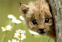 Animal / So cute! / by Donna Adami