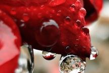 Dew Drops / by Karen Bedson/Westerberg