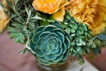 Flowers for June Wedding/Bouquet Ideas / by Brianna Lamoreux