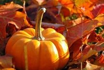 Autumn / by Larkin
