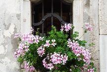 Window Box / by Liesl Leman