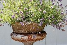 Garden Details / by Liesl Leman