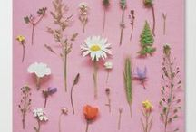 flowers and plants / by Jeanne Botes