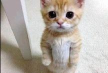 Cat - Felinos / by Gigi Brazil