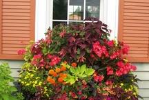 I love to Garden / by Sarah Gwirtz
