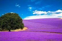 All things purple, fushia, etc / Different shades of purple / by Lea Lambert