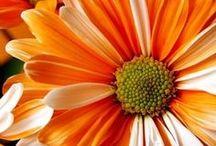 Flowers / All types of flowers! / by Lea Lambert