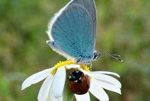 Butterflies & Ladybugs / Butterflies & Ladybugs / by Lea Lambert