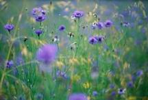 Nature / by Lisa AMC ♥