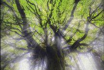 ENCHANTING GREEN GOODNESS  / by Karen Haskett