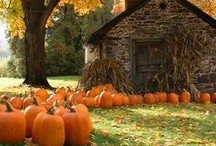 Fall - my favorite time of the year / by Norma Snider