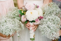 Learning to love Baby's Breath - Gypsophila / Visit our other Boards dedicated to EVERYTHING WEDDING / by Debi Brickell