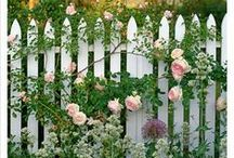 FLOWERS & FENCES / Nothing Sweeter than Flowers Clinging to a Fence / by Marilyn M.