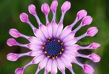 Fabulous FloweRS / #flowers / by vseeg ~