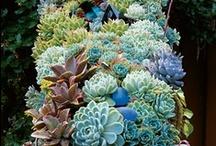 garden | outdoor plants, deco ... / by beartblog