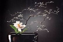 Ikebana & Bonsai / Japanese art of flower arrangement. Ikebana is a means of communicating pleasure, harmony, and happiness. / by Judy Mercer
