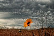 beauty in nature's fury / by Stacey Vaughn