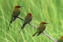 Birds / by Nancy Hunt