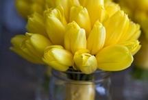 Flower Power / by Nancy Hunt