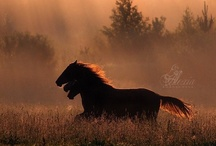 Spirit Of The Horse.. / by Annameria Strickland Ward