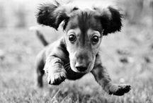 Cute Pets / by Kellie Hopkins