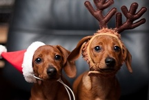 "Wouf wouf / ""Whoever said you can't buy happiness forgot little puppies"". ~Gene Hill #dogs #pets / by Pascale De Groof"