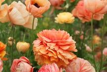 Flowers n Such / by Meg Waldo Bowen