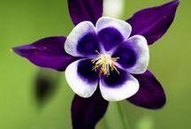 Flowers / by Iri Schindler