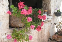 A Gringa's Love of Mexico / by Dianne M M