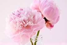 Flowers / by Suvi
