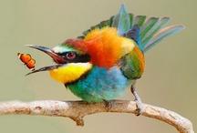 Color, color, color! - It's a beautiful thing. / by Mintz Web Design