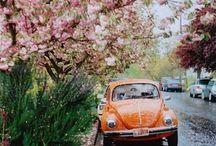 4 Wheels / Campers, beetles & mini's! The best things on four wheels (in my opinion)  / by Helen Kennerk