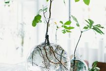 Home: Indoor plants / by Caitlin Dent