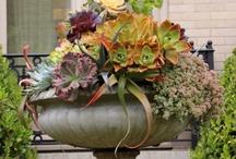 Gardening / by Francine Brooks