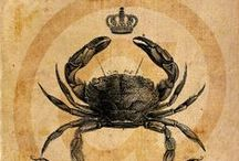 Crab-a-liscious / by Kelli Fisher