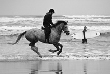 Horses / by Jessie Mason