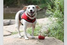 KONG Company Office Dogs / by KONG Company