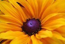 FLOWERS / by Michelle Brunet