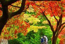 Autumn / by Alison Von Hahn