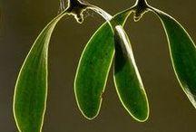 greens / by Marylene Lynx